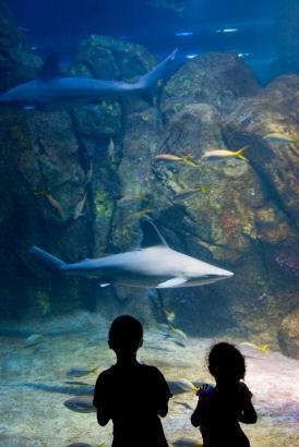 Seattle Aquarium Guide Seattle Travel